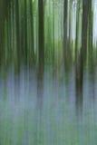 会开蓝色钟形花的草迷离森林地 免版税库存照片