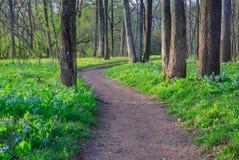 会开蓝色钟形花的草野花走的足迹道路 免版税图库摄影
