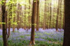 会开蓝色钟形花的草阳光 库存照片
