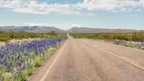会开蓝色钟形花的草,大弯曲国家公园,大弯曲国家公园, TX 库存图片