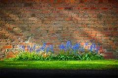 会开蓝色钟形花的草&砖 库存图片