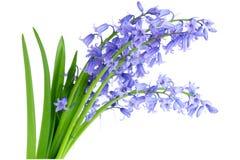 会开蓝色钟形花的草 库存照片