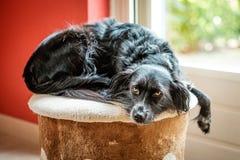 会见唐娜,在莱斯博斯岛希腊海岛上的一个草甸找到的一只杂种,流浪狗  免版税图库摄影
