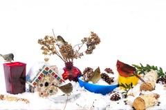 会集在暴风雪以后的鸟哺养在五颜六色的容器的鸟饵在室外桌上 图库摄影