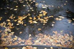 会集在雨水坑的秋天叶子 免版税库存照片