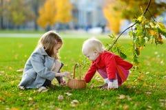 会集橡子的小女孩在秋天天 免版税库存照片