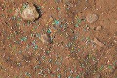 会集甜点的蚂蚁洒 免版税图库摄影