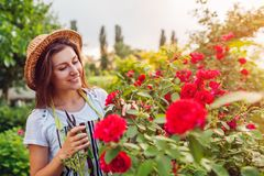 会集花的年轻女人在庭院里 嗅到和切掉玫瑰的女孩 r 免版税库存图片