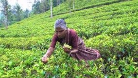 会集茶,斯里兰卡- 2017年2月10日的斯里兰卡的妇女 影视素材