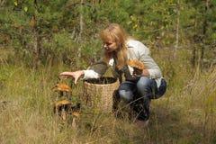会集蘑菇的少妇在森林里 免版税库存照片
