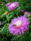会集蜂蜜 库存图片