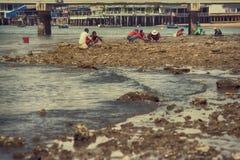 会集贝类的地方壳捡取器工作 免版税图库摄影