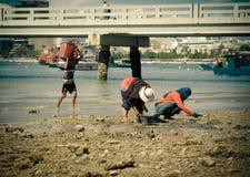 会集贝类的地方壳捡取器工作 图库摄影