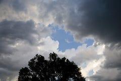 会集暴风云和日落光与树 图库摄影