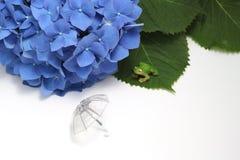 伞、八仙花属和一只青蛙在白色背景 免版税库存照片