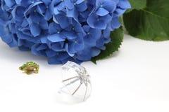 伞、八仙花属和一只青蛙在白色背景 库存照片