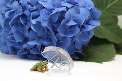 伞、八仙花属和一只青蛙在白色背景 库存图片