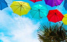伞和一棵绿色棕榈树五颜六色的背景  免版税库存照片