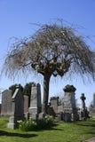 伞形树在坟园-苏格兰 图库摄影