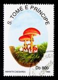 伞形毒蕈凯瑟里雅,蘑菇serie,大约1993年 免版税库存图片