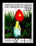 伞形毒蕈凯瑟里雅,贝宁采蘑菇serie,大约1997年 库存照片