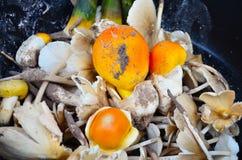 伞形毒蕈和Termitomyces蘑菇 免版税库存图片