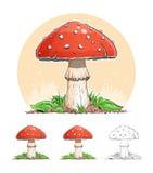 伞形毒蕈 蘑菇 免版税库存图片
