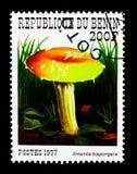 伞形毒蕈bisporigera,贝宁采蘑菇serie,大约1997年 免版税图库摄影