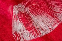 伞形毒蕈muscaria孢子印刷品特写镜头  免版税库存照片