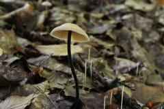 伞菌在森林里 免版税库存图片