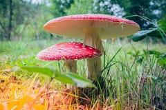 伞菌在阳光下 免版税库存图片