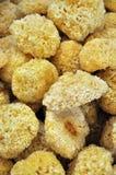 伞菌干燥保留的白色 免版税库存图片