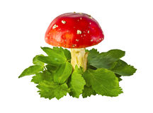 伞菌飞行离开蘑菇 库存照片