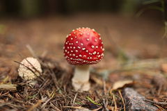 伞菌 免版税图库摄影