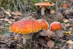 8伞菌eps在向量白色的飞行蘑菇 免版税库存照片