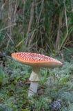 8伞菌eps在向量白色的飞行蘑菇 库存图片