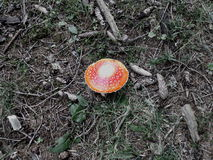 8伞菌eps在向量白色的飞行蘑菇 免版税库存图片
