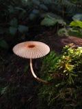 伞蘑菇在森林里 免版税库存图片