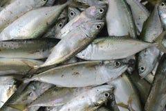 伟大在销售中的许多银色新鲜的海鱼在渔夫上,发光的标度市场  免版税图库摄影