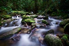 伟大生苔在岩石和慢快门水流量的 库存照片
