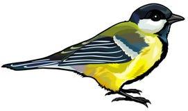 伟大的北美山雀 免版税库存图片