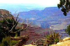 伟大的大峡谷 免版税库存图片