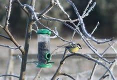 伟大的山雀在冬天 免版税库存图片