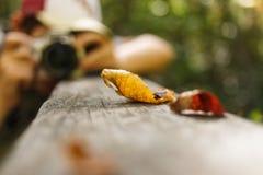 伟大的沼泽全国野生生物保护区 免版税库存图片