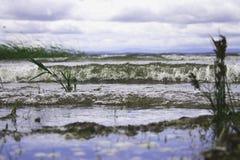 伟大的湖的宏观世界 免版税库存图片