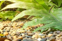 伟大的热带叶子室外在潮湿早晨空气 密集的绿色植物群在背景中是我在t种植的新的成长 库存照片