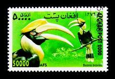 伟大的犀鸟(Buceros bicornis),国际邮票Exhibitio 免版税图库摄影