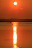 伟大的白鹭、鹈鹕和伟大蓝色的苍鹭的巢早餐在清早在日出在秃头瘤野生生物保护区 库存图片