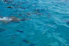 伟大的礁石 库存照片