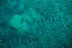 伟大的礁石 免版税图库摄影